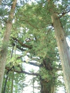 20091012_03塩原八幡宮・有網神社.jpg
