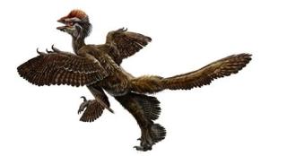 20091012_4翼羽毛恐竜.jpg